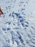 Dog Snow Angel